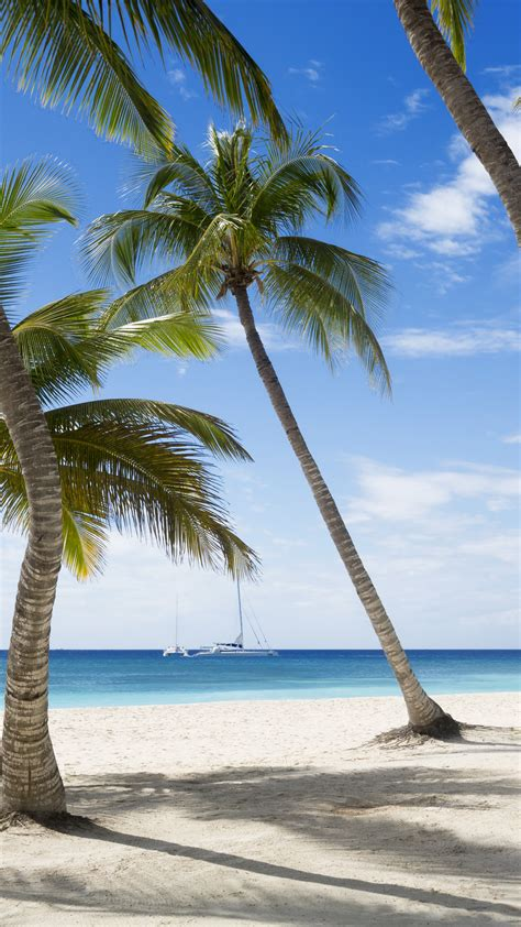 wallpaper jamaika   wallpaper  caribbean beach