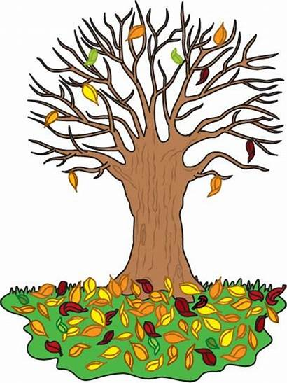 Tree Trunk Fall Clipart Clip Autumn Automne