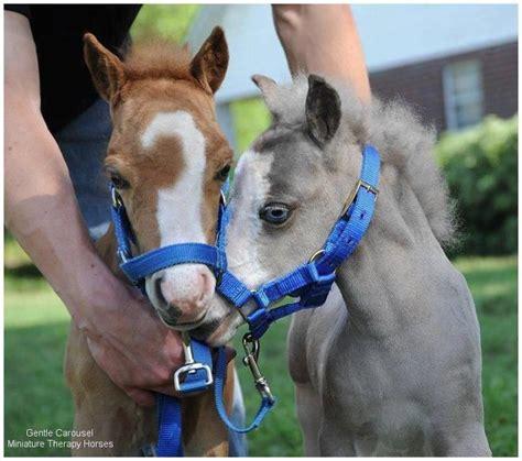 baby horses images  pinterest baby horses