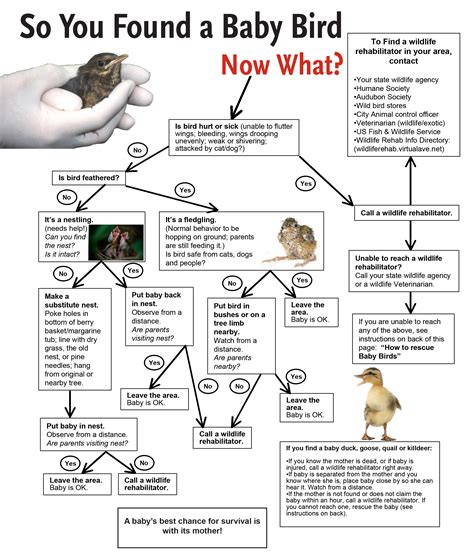 it s baby bird season please read this before asking