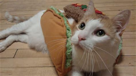 cat fact friday taco cat spelled   taco cat