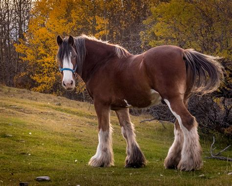 horse strong bigfoot sparks norm photograph 21st uploaded december which