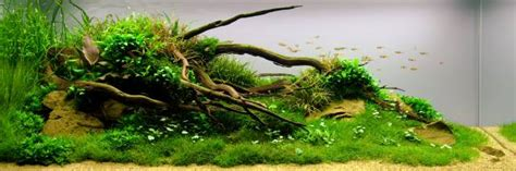 Layout Forms In Aquascaping  Aquascaping Wiki