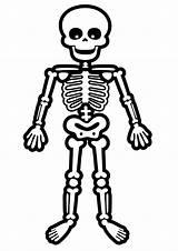 Skeleton Coloring Pages Bones Bone Cartoon Skeletons Standing Printable Halloween Dog Drawings Toddler Drawing Clipart Human Humano Cartoons Template Esqueleto sketch template