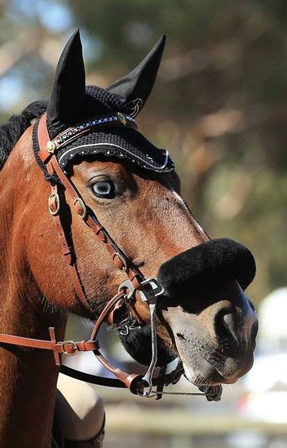 bitless bridles bridle showjumping eventing warwick carol owned