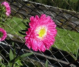 Was Blüht Jetzt Im Garten : bilder ~ Lizthompson.info Haus und Dekorationen
