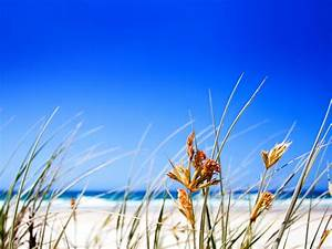 Free Summer Beach Grass computer desktop wallpaper