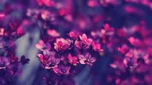 скачать картинки красивые любовь