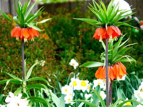 Quelle Fleur Planter En Fevrier Mars