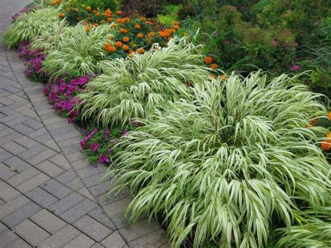 Gardening In Zone 6 With Shrubs  Gardening Tips For Zone