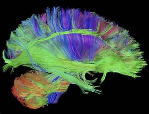 The Art Of Science  Take A Look At The Future Of Brain