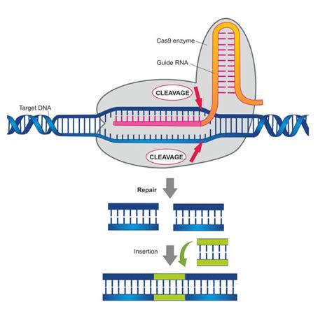The Ronald Laboratory - Genome Editing