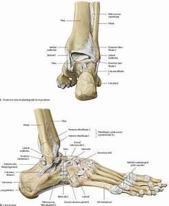 Ankle  U0026 Foot