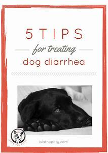 5 tips for treating dog diarrhea