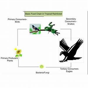 Related Pictures Simple Food Chain Diagram Desert Food