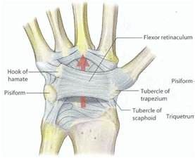 Wrist Ligaments and Tendons Injury