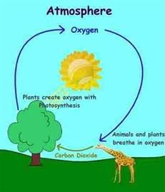 Carbon-Oxygen Cycle Diagram