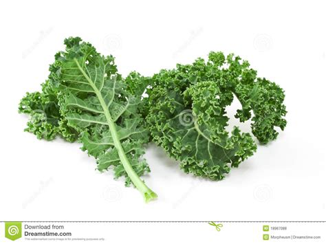 curly kale clipart clipground