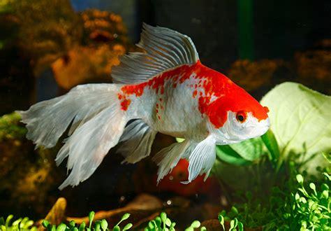 fonds decran poisson animaux telecharger photo