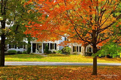 what gives plants their green color fall foliage bennington vt why leaves change color