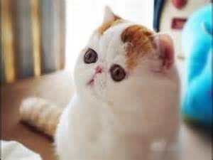 world s cutest cat officially the cutest cat in the world