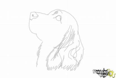 Spaniel Cocker Draw Step Coloring Drawingnow Steps