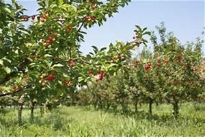 Arbres Fruitiers Nains En Pleine Terre : arbre fruitier demi tige choix d 39 un arbre fruitier demi tige ~ Premium-room.com Idées de Décoration