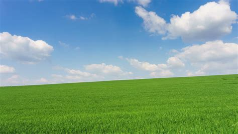 Meadow With Green Grass And Blue Sky With Clouds Stock