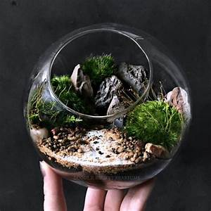 Desktop Ecosphere Moss Terrarium Orb - ApolloBox