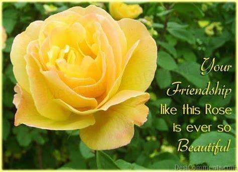 friendship  rose desicommentscom