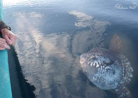 atlantic ocean boat  dolphins whales