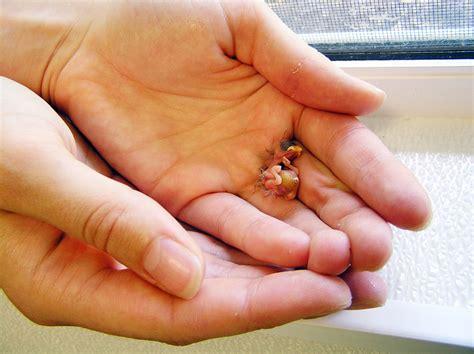 smallest human baby in the world www pixshark