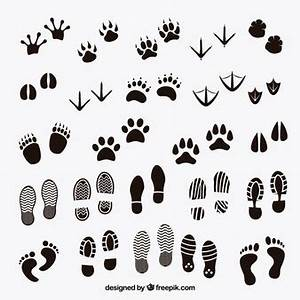 Footprint Vectors, Photos and PSD files | Free Download