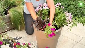 Blumenkübel Bepflanzen Sommer : bepflanzen von pflanzschalen und balkonk sten youtube ~ Eleganceandgraceweddings.com Haus und Dekorationen