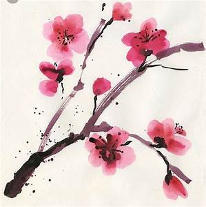 Drawn cherry blossom pink blossom - Pencil and in color ...