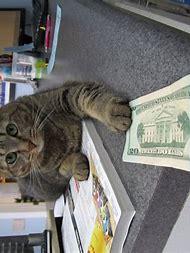 Cuddles Cat Meme Funny