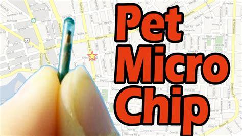 Gps Microchip For Pets- Pet Hospital Murrieta