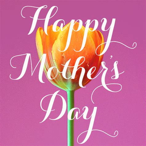 Animated Wallpapers Day - happy mothers day memes pictures images mothers