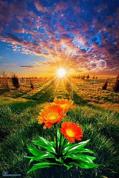 Nature Google Sunrise Places Flowers Plus Manzara