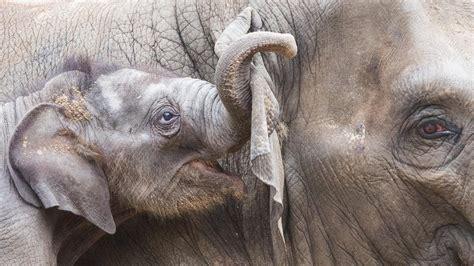 krebs elefanten haben genetischen schutz vor mutationen welt