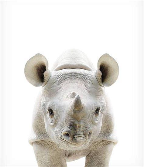 baby rhino print wildlife prints the crown prints