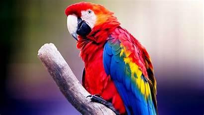 Bird 4k Macaw Wallpapers