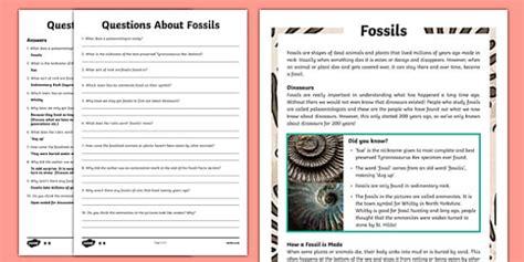 fossils worksheet sedimentary palaeontology dinosaurs