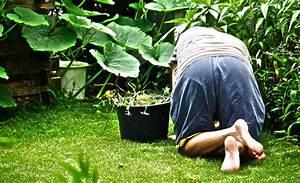 unkraut entfernen pflanzenschutz selbstde With französischer balkon mit gasbrenner garten unkraut