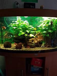 Komplett Aquarium Kaufen : alt co2 kleinanzeigen kaufen verkaufen bei deinetierwelt ~ Eleganceandgraceweddings.com Haus und Dekorationen