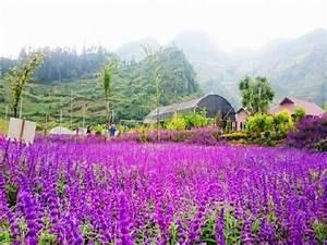 deux champs de fleurs pittoresques du vietnam du nord With ou acheter un tapis champs de fleurs