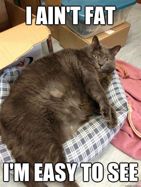 Funny Fat Memes - fat cat memes image memes at relatably com