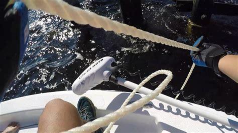 grouper goliath lb boca grande caught