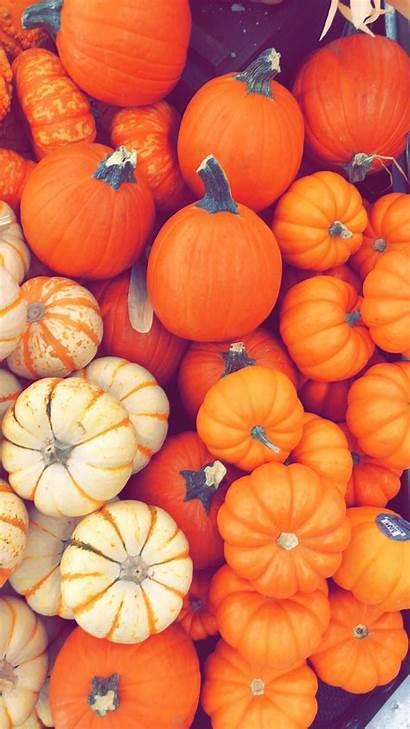 Pumpkin Iphone Autumn Fall Backgrounds Wallpapers Wallpaperaccess