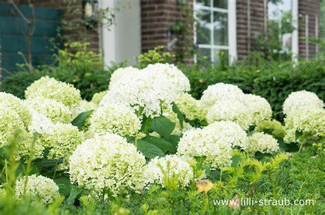 garten für faule das beste pflanzkonzept f 252 r faule g 228 rtner tipps f 252 r einen pflegeleichten garten lilli straub